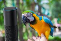 Zusammenschnitt: Amazon Echo mit Papagei