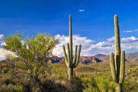 Sonoran Wüste mit Saguaro Kaktus