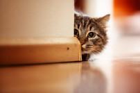 Katze, die sich hinter einer Ecke versteckt