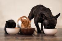 Haustiere Hund und Katze