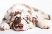 Hund, der auf dem Boden liegt
