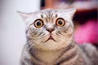 Erschrockene Katze