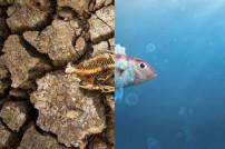 Klimawandel: Toter Fisch vs. lebender Fisch