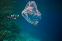 Fische um Plastiktüte