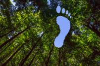 Fußabdruck in den Bäumen
