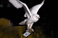 Amazon liefert Harry Potter-Band, Screenshot Facebook