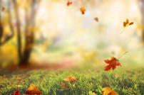 Herbst: fallende Blätter