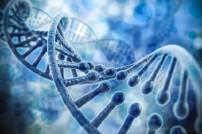DNS-Strang