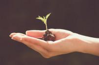 Kleine Pflanze in Hand
