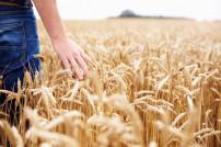 Farmer im Weizenfeld