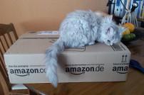 Katze auf Amazonkarton